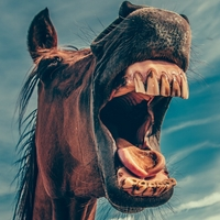 Different Horses