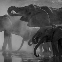 Four Elephants in a storm